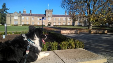 Lampeter University from 1822 Border Collie DJ