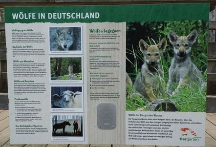 Wolves in Germany, Wölfe in Deutschland