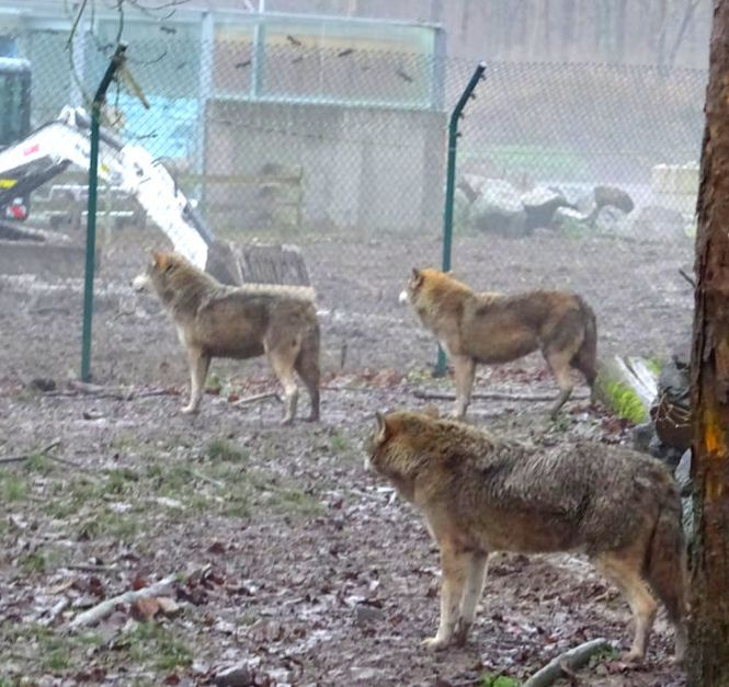Wolf Enclosure Gehege